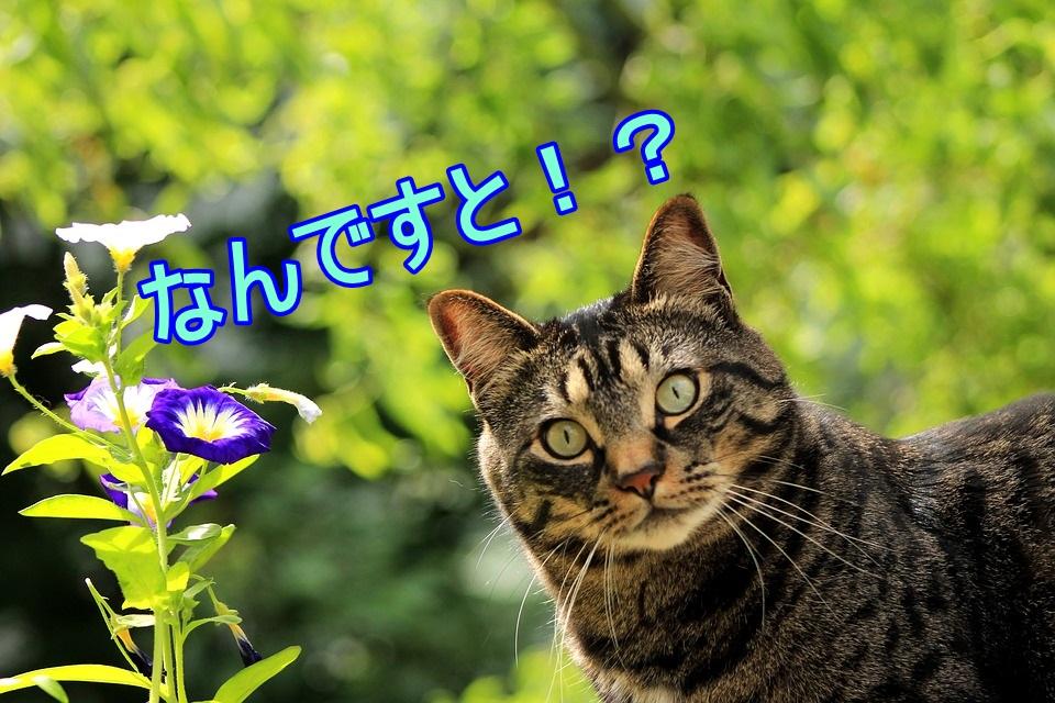 新型ジムニーシエラの人気色・カラーバリエーション一覧!!おすすめはジャングルグリーン?